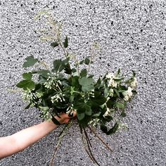fabulous vancouver florist Establishing a sturdy foundation. #bouquetbasics #foraged #afterlight maybe stucco isn't the best backdrop ...  #vancouverflorist #vancouverflorist #vancouverwedding #vancouverweddingdosanddonts