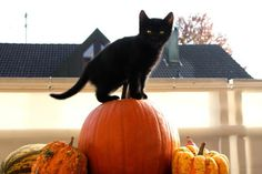 (via I Can Has Cheezburger? - Lolcats n Funny Pictures - funny pictures - Cheezburger) I Love Cats, Cute Cats, Funny Cats, Cat Fun, Samhain, Mabon, Halloween Cat, Happy Halloween, Halloween Stuff