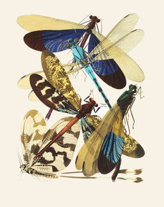 Papillons, by E.A. Séguy. Paris, France, 20th century.""