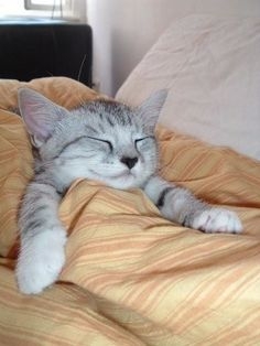 Hang out there for a while.   19 Cats Looking So Cozy That It Will Finally Bring You Peace