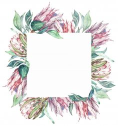 Square pink protea frame. watercolor exotic floral illustration. Premium Photo | Premium Photo #Freepik #photo #flower #frame #watercolor #vintage Watercolour Painting, Watercolor Flowers, Shower Plant, Protea Wedding, Protea Flower, Abstract Line Art, Floral Border, Water Colors, Floral Illustrations