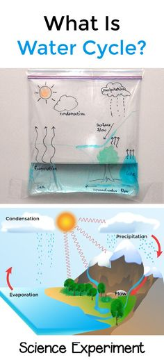 Water cycle in a bag | STEM For Kids