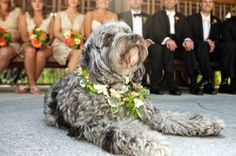 Including Your Dog in Your Wedding - Guest post by Lucky Pup Adventures