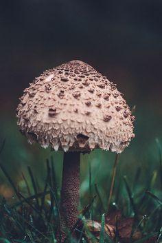 mushroom #nature