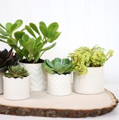 DIY Stamped Clay Succulent Pots from Damask Love