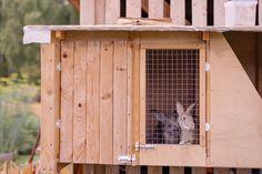 Je kunt een konijnenkooi gemakkelijk zelf maken. Een goed konijnenhok geeft beschutting, is gemakkelijk schoon te maken en is bestand tegen vocht.