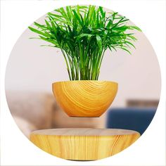 ☺ Style: Modern, Finishing: Glazed ☺ Usage Condition:Desktop,Type:Nursery Pots ☺ Material: Resin ☺ Used With: Flower/Green Plant # PlantsPotIdeas Floating Plants Succulent Gardening, Organic Gardening, Green Plants, Potted Plants, Floating Plants, Resin Uses, Home Office Decor, Home Decor, Gardening Supplies
