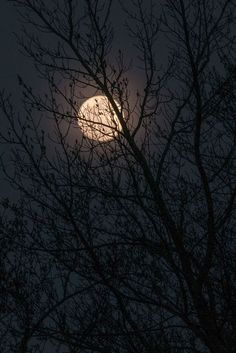 Waxing gibbous moon 4-13-14 Photo by Free A. -- National Geographic Your Shot www.freeakinsphotography.com