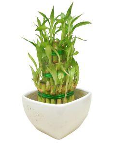 pflegeleichte zimmerpflanzen pflanzen ideen