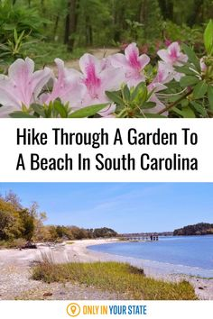 Walk through a beautiful botanical garden to a sandy beach in South Carolina. This short, scenic, and easy hiking trail is fun and family-friendly. Lighthouse Trails, Leading From The Front, Hidden Beach, Adventure Tours, Botanical Gardens, South Carolina, Wild Flowers, In The Heights, Things To Do