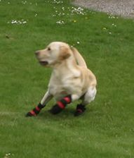 Dog Boots that Stay On Dog Booties, Dog Winter Coat, Dog Activities, Boots, Animals, Design, Crotch Boots, Animales, Animaux