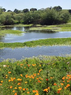 Constructed Wetlands, Sonoma County, CA