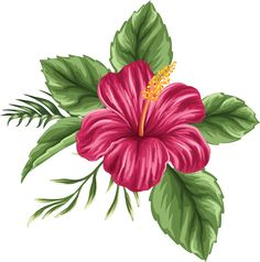 Hand Painted Hibiscus Flower, Flower Clipart, Hibiscus Flower, Flowers PNG Transparent Image and Cli Hawaiian Flowers, Hibiscus Flowers, Tropical Flowers, Hibiscus Flower Drawing, Drawing Flowers, Hawaiian Flower Drawing, Hawaiian Flower Tattoos, Hibiscus Flower Tattoos, Flower Doodles
