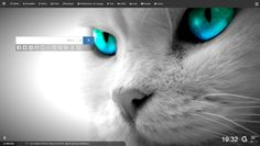 White Cat with Turquoise Eyes.is this for real. Wallpaper Gatos, Tier Wallpaper, Cat Wallpaper, Animal Wallpaper, Apple Wallpaper, Photo Wallpaper, Galaxy Wallpaper, Nature Wallpaper, Teal Eyes