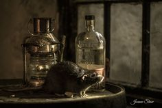 Rat by Joanne Laws