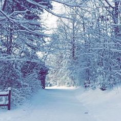 Snow day I love the beauty and peacefulness of a freshly fallen snow. #firstsnow #snowday #getoutside #gooutside #westernnc #ncsnow