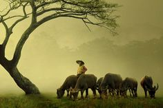 The Visual Beauty of Indonesia Illustrated by Sukron Ma'mun Photography a.a Ipoenk Graphic — Photography Office Photography Office, Life Photography, African Life, African Art, Cebu, Dramatic Arts, Simple Photo, What A Wonderful World, Lovers Art