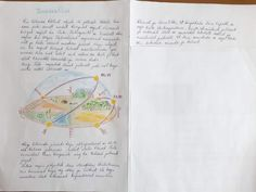 IV Ilmavaatlus - 5 Geograafia - Tera Notebook, Bullet Journal, The Notebook, Exercise Book, Notebooks
