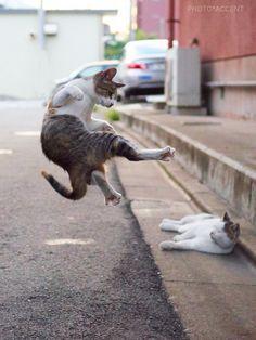 カンフー猫が成長して動きが洗練されている - ツイナビ | ツイッター(Twitter)ガイド                                                                                                                                                                                 もっと見る