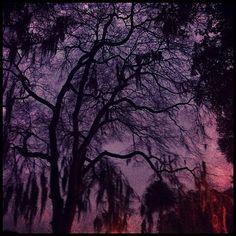 Twilight in Forsyth Park - gorgeous!