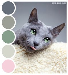 Pastel Feather Studio CAT HUES - color palette it's time to shine