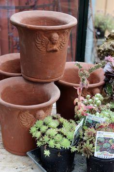 Piazzan: Krukor och inspiration till trädgård och balkongodling .