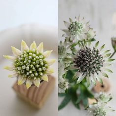 "557 Likes, 38 Comments - Atelier Ryeo - Daegu, Korea (@atelier_ryeo) on Instagram: ""아스트란티아 좀 더 이쁘게 업그레이드 ^^ #대구플라워케이크 #대구꽃배움반 #대구앙금플라워 #대구앙금꽃배움반 #대구앙금플라워떡케이크 #플라워케이크 #flower #flowers…"""