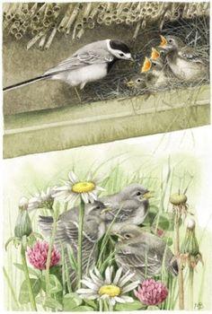 marjolein bastin illustration - Google Search