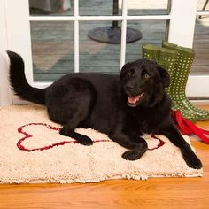 Absorbs your dog's mess in no time!  Machine wash & dry. No-slip back.    Super-absorbent, microfiber chenille doormat soaks up water and dirt like a sponge. Absorbs 5x more water and dirt than regular doormats.    Exceptionally durable and velvety-soft (makes a perfect crate-liner too).