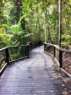 Looks like Janeen has Wanggoolba Creek boardwalk to herself.  #fraserexplorer #fraserisland #queensland #australia www.fraserexplorertours.com.au