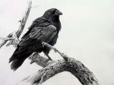 """Robert Bateman, """"Raven on Fir Branch"""" - 2004"""