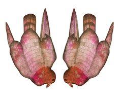 pigeons, Hubert Kołodziejski