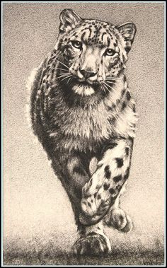 begich snow leopards pencel drawings | The Chase' - Snow Leopard - Fine Art Pencil Drawings www ...