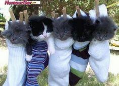 Chaton Humour. Images comiques de chatons mignons, photos drôles de chatons rigolos, photographies insolites marrantes de bébés chats adorables, petit matou blagueur, images de chatons souriants