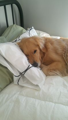 Always on the pillow.