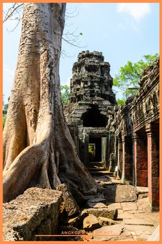 Ta Prohm, part of Khmer Angkor temple complex, popular among tourists ancient landmark and place of worship in Southeast Asia. Siem Reap, Cambodia. Ta Prohm, Angkor Wat Cambodia, Cambodia Travel, Siem Reap, Buddhist Temple, Place Of Worship, How Beautiful, Southeast Asia, World