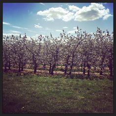Blossom time in Herefordshire, Vineyard, Country Roads, Mountains, Eat Sleep, Nature, Travel, Outdoor, Live