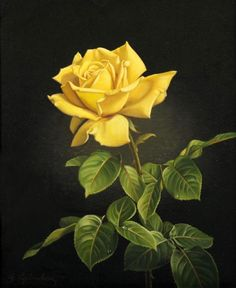 A Yellow Rose by Wolfgang Grünberg (1909-2001). #Art #Floral #Flowers