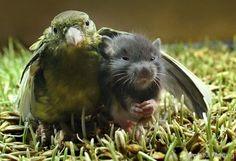 "25 Odd Animal Friendships That Make You Wanna Say ""Aww"" « Regretful Morning"