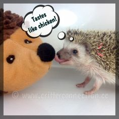 How cute is this little hedgehog!?