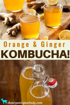 Do you make your own Kombucha? Are you always on the look out for new Kombucha flavors? This Orange and Ginger Kombucha Recipe is. Ginger Kombucha Recipe, Kombucha Drink, Kombucha Flavors, How To Brew Kombucha, Probiotic Drinks, Coffee Kombucha, Fermentation Recipes, Homebrew Recipes, Kombucha Health Benefits