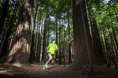 Sage Canaday running through the Redwood Forest, Rotorua Running Images, Rotorua New Zealand, Redwood Forest, Mead, Sage, Trail, Photography, Photograph, Salvia