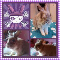 Maggie, nuestra bunny piratilla, sigue luchando como una campeona #weloveMaggie