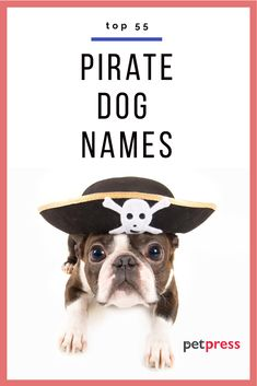 Ay matey! All aboard to give your pup a pirate dog name! We have you covered with our favorite 55 names and a reference for each name how they originated as a pirate name. Great Dog Names, Cute Names, Dog Breed Names, Puppy Names, Types Of Dogs Breeds, Pirate Names, French Bulldog Names, Kitten Names, Dog Stories