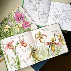 Третье занятие мы проводим за рисованием самых инопланетянских цветов - орхидей. Они совсем другие и о них можно говорить долго, не одно занятие. Подробнее - на БОТАНИЧЕСКОМ КУРСЕ-2 (Продолжающий). А для базового пока одно. #botanicalgarden #botanical #botanicalillustration #botanicallife #скетч #скетчинг #sketchbook #sketching #sketch #copic #copics #marker #markers #mk_kato