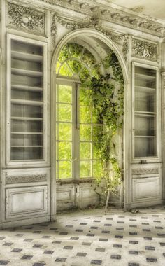 Nature makes itself at home in this abandoned house.