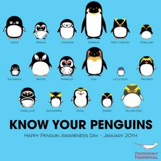 Penguin Awareness Day Is Jan. 20! (PHOTOS, VIDEOS) : Pets ...