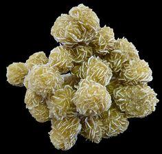 Gypsum—Desert Rose.