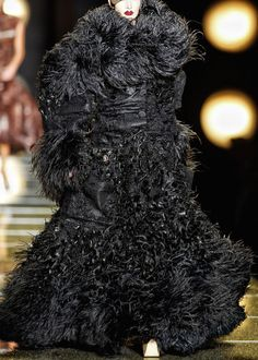 Alright, who shaved the Newfoundland dog?