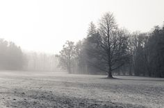 Cold misty morning